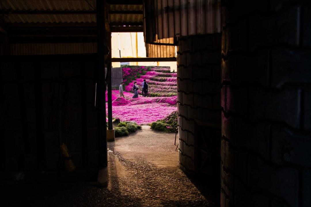 Toshiyuki Kuroki Garden 035