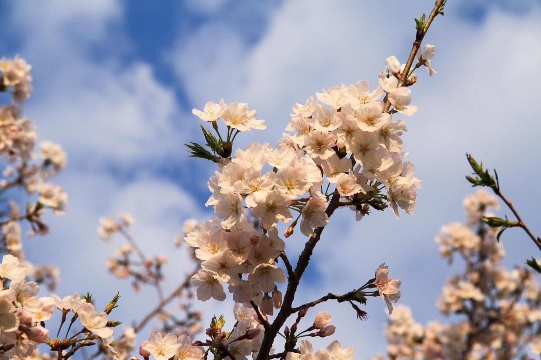 Toshiyuki Kuroki Garden 057