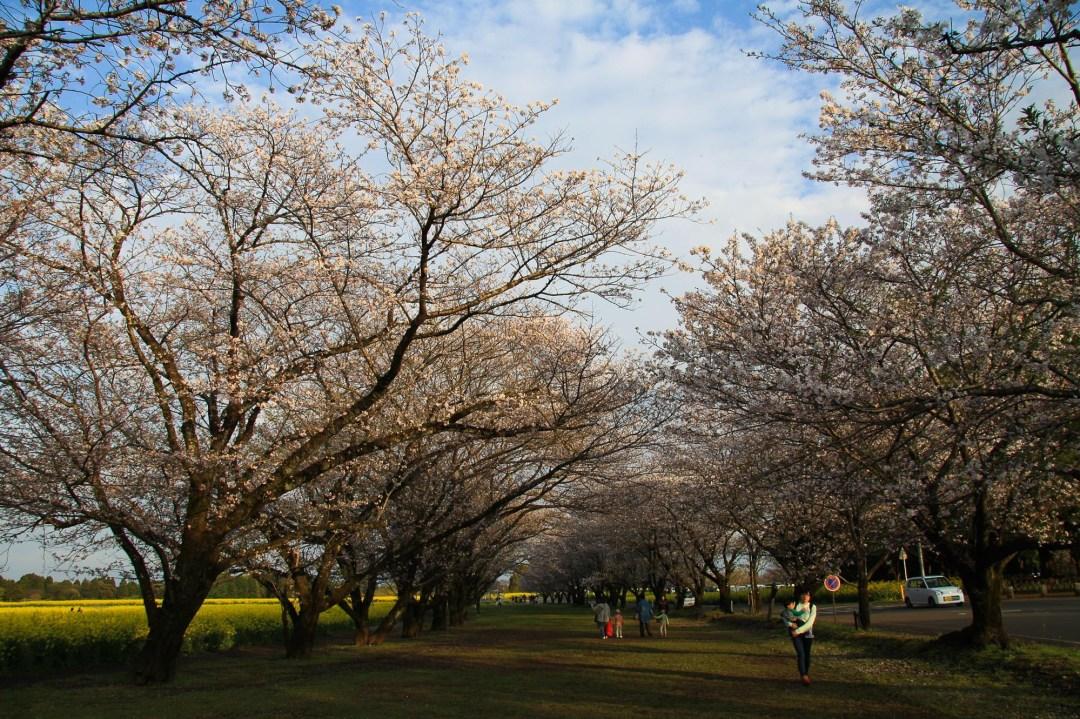 Toshiyuki Kuroki Garden 065