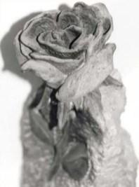 rosa-pietra-a.jpg