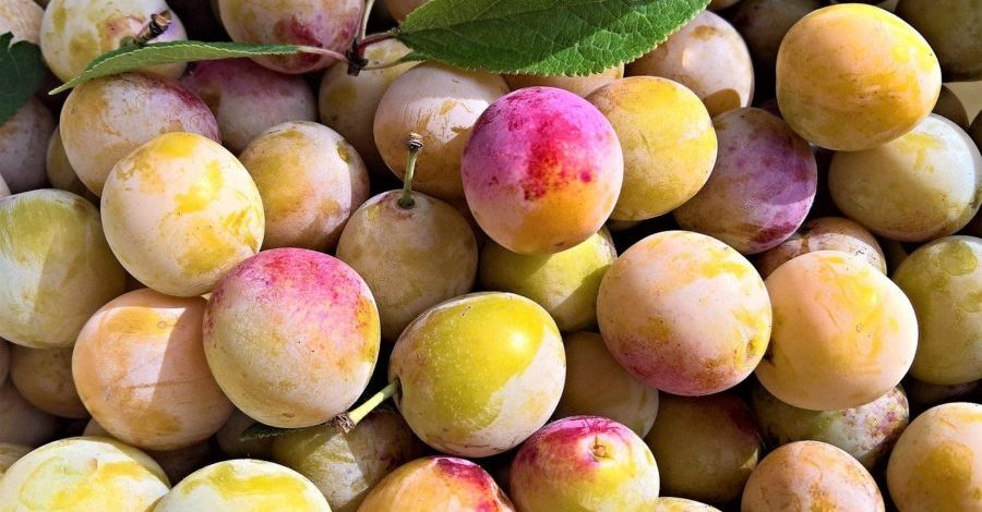 Mirabelles (pour mendiant Steiner) Pixabay yellow-plums-4423246_1280