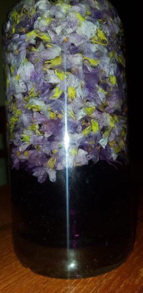 Violettes dans rhum arrangé après 24 h © Pascal Heitzmann