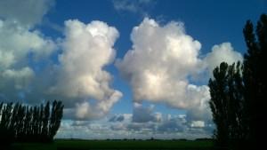 Poplar stands, enormous skies