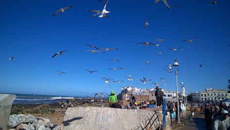Essaouria fishing sardines morocco
