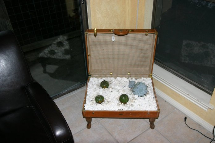 4 Old Suitcase Planters via simphome