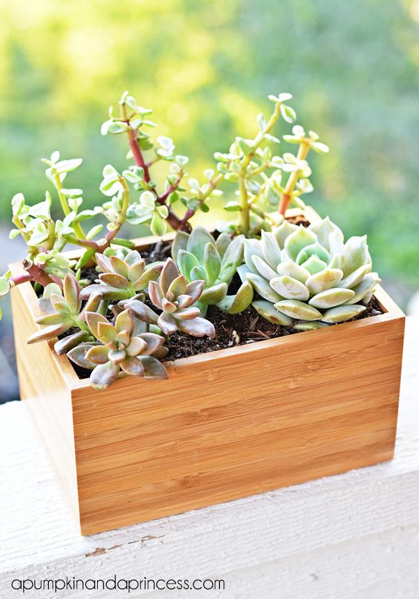 6. Succulent planter box