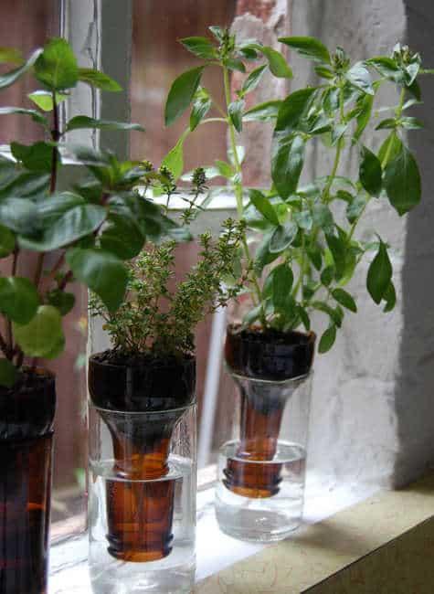 10 Bottle Gardens via simphome