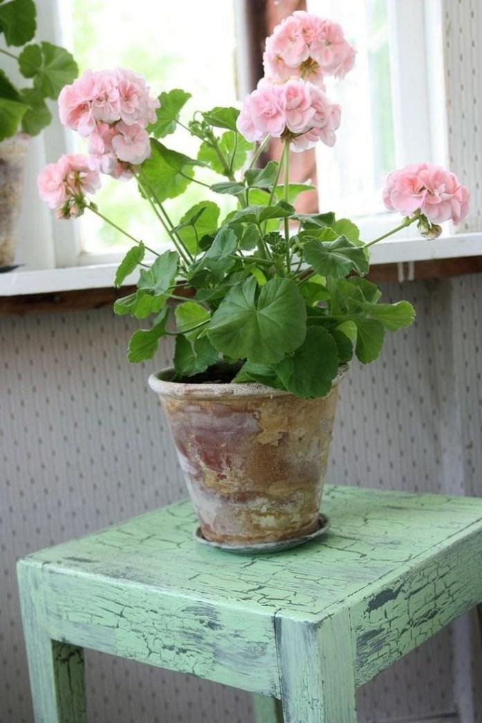 9. Scented Geranium via SIMPHOME.COM