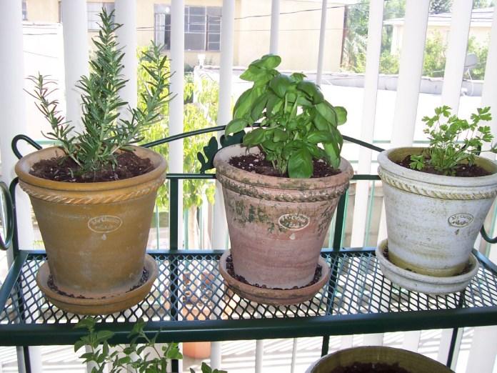Simphome.com growing herbs indoors how to grow herbs indoors with bonus ideas