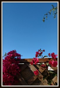Signs of Spring / A Slice: Weekly Photo Series / Phoenix Arizona / blooms / desert sky / SimpleBrightLife.com
