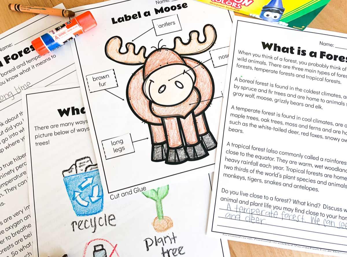 Free Printable Forest Animal Worksheets For Kindergarten
