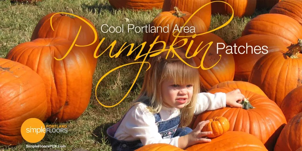 Cool Portland Area Pumpkin Patches