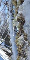 Beauty of Snow in Oregon