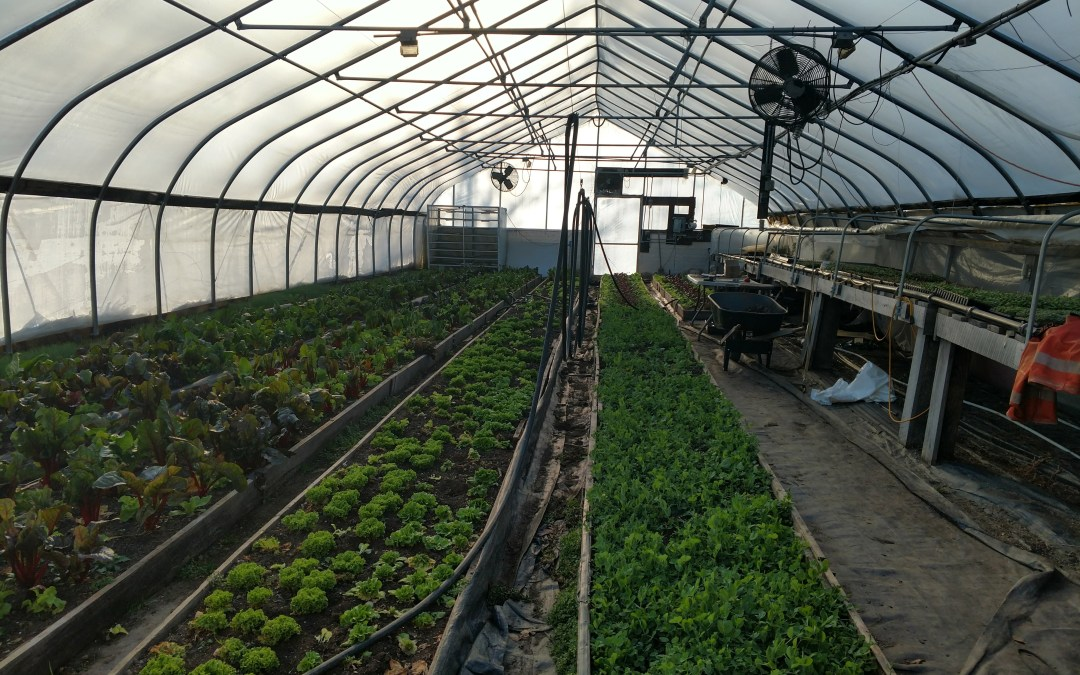 Virtual Greenhouse tour