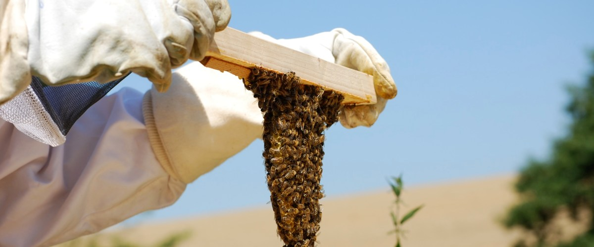 simple life farm beekeeping