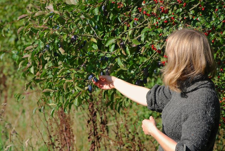 plum trees simple life farm b&b