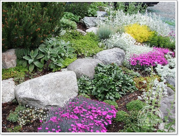 beautiful rock garden design