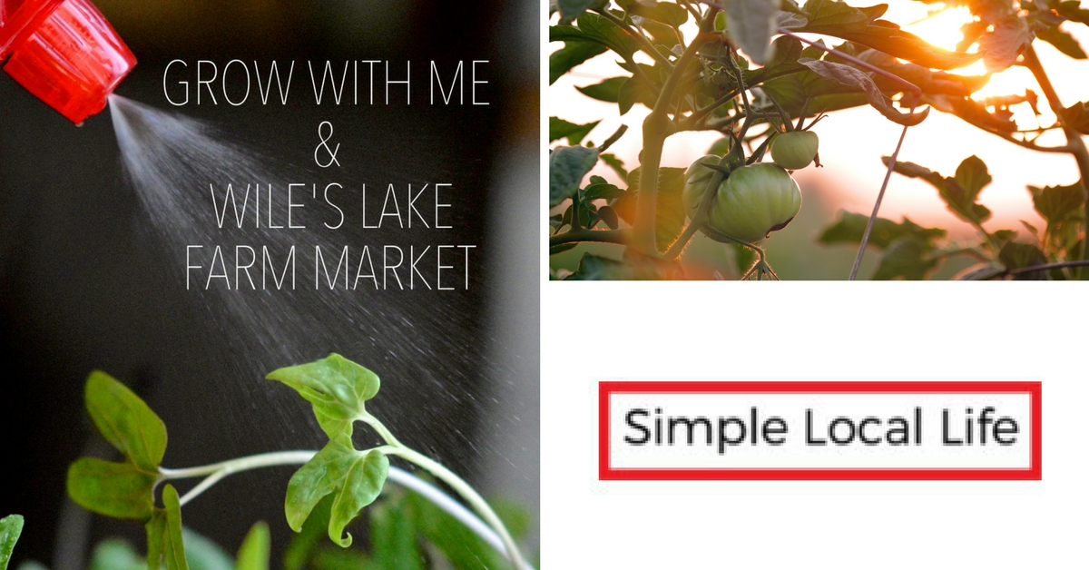 Grow With Me and Wile's Lake Farm Market- Succession Planting for Fall Crops