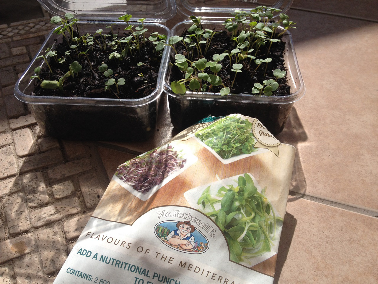 City Gardener: How To Grow Microgreens