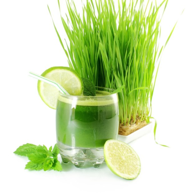 fresh sprouted wheat grass juice with wheat grass in white background
