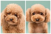 adorable dogs '