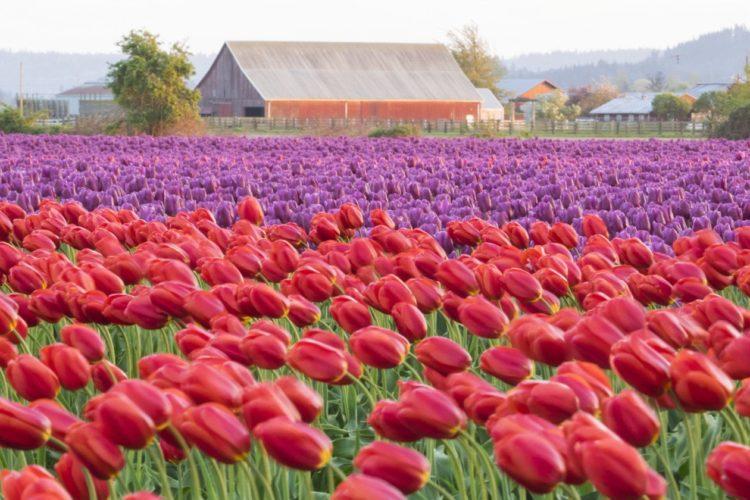 best flower festivals to