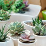 How To Propagate Succulents Simplemost
