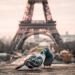birds and Paris Eiffel Tower