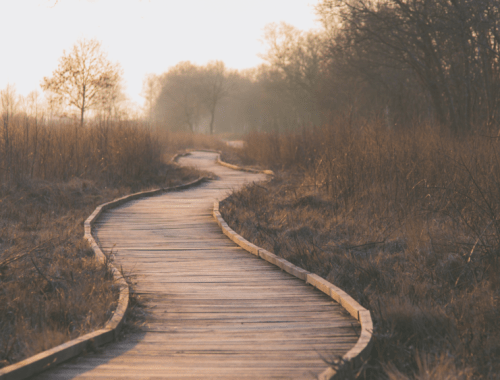 a curved wooden path