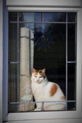 Anglia ferestre