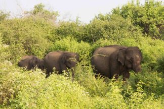 Udawalawe_National_Park