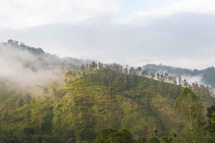 Landscape_Sri_Lanka