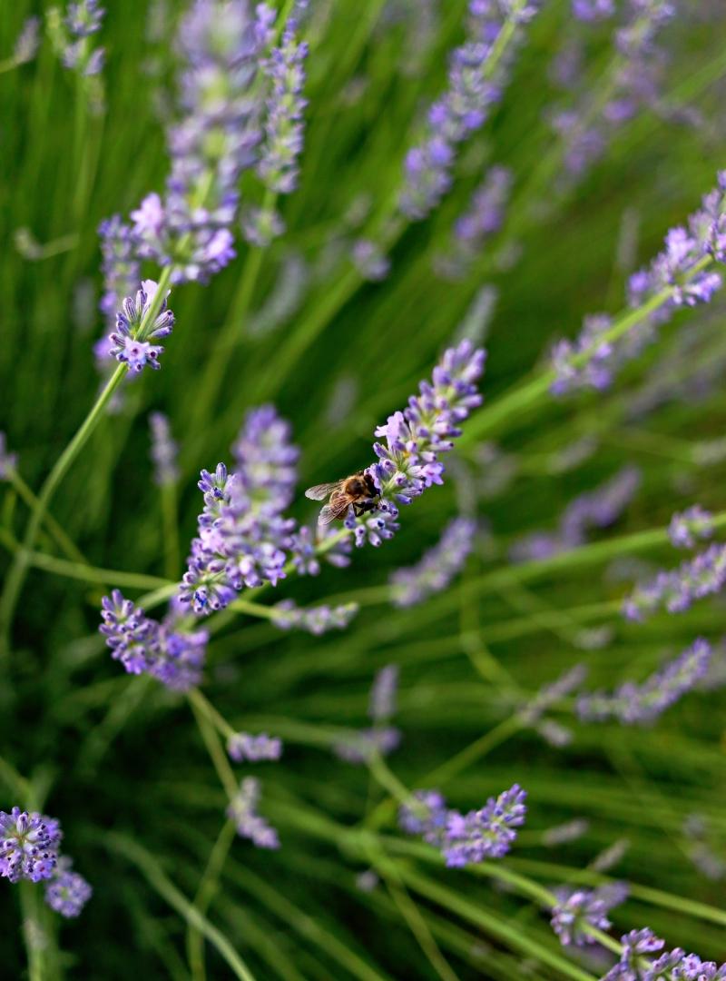 Šta su nervine [ + najbolje ljekovite biljke za nervni sistem i jači imunitet ]