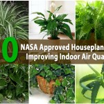 10 Best Houseplants That Purify The Air In Your Home Or Office