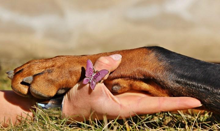 dog-paw-1102125