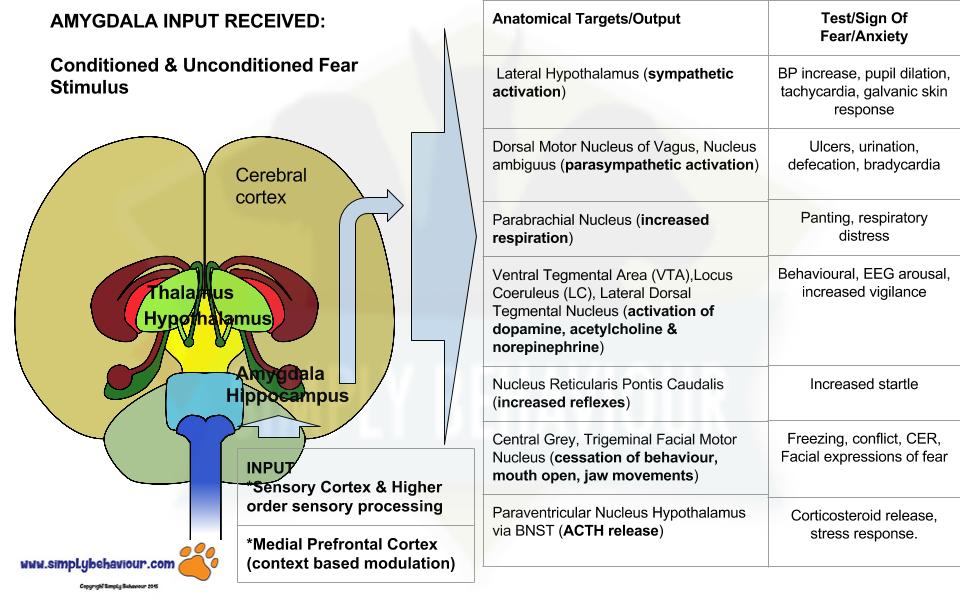 Limbic Emotional Associated Systems Simply BehaviourLimbic System Function