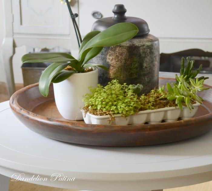 succulent-vignette-tabletop