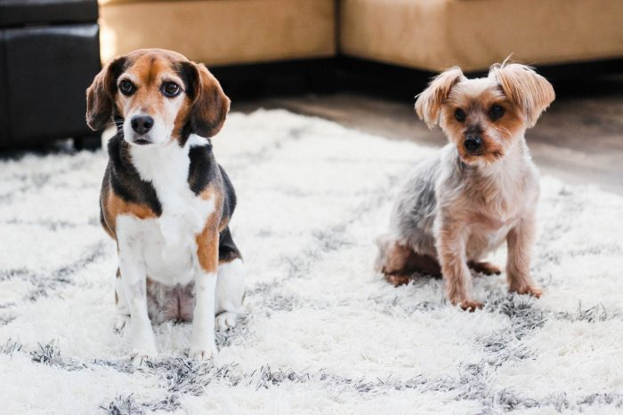 how to encourage bonding with kids and pets