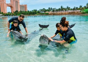 Atlantis Dolphin Cay for Young Kids
