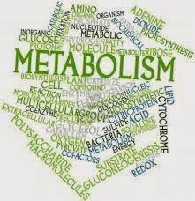 Tips Meningkatkan Metabolisme dalam Tubuh