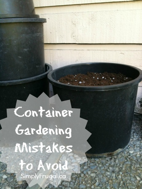 Container gardening mistakes to avoid
