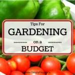 52 Ways To Save: Start a Garden on a Budget (Week 10)