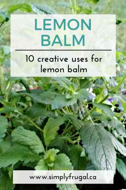 10 creative uses for lemon balm