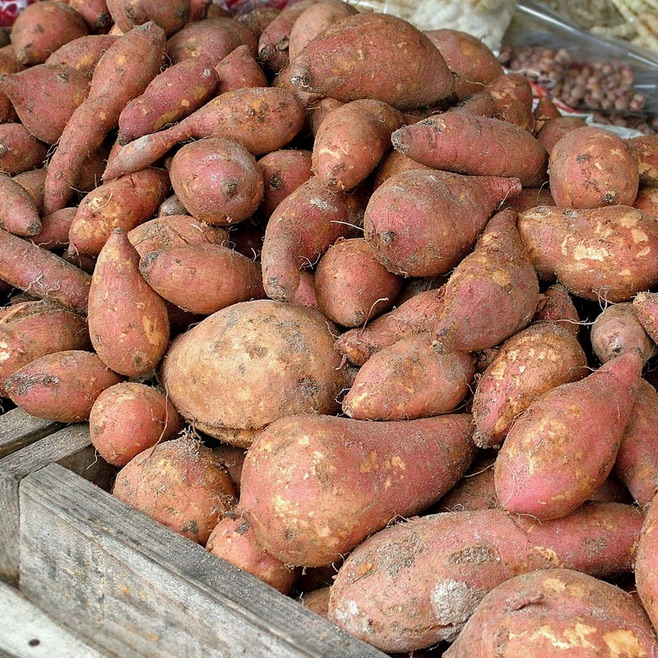 High yield of sweet potatoes