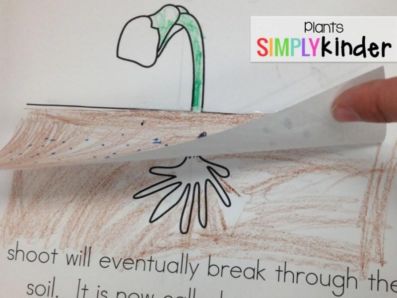 plants, plants activities, kindergarten plants