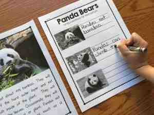 Grab this free nonfiction panda unit from Simply Kinder to celebrate the release of Kung Fu Panda 3!