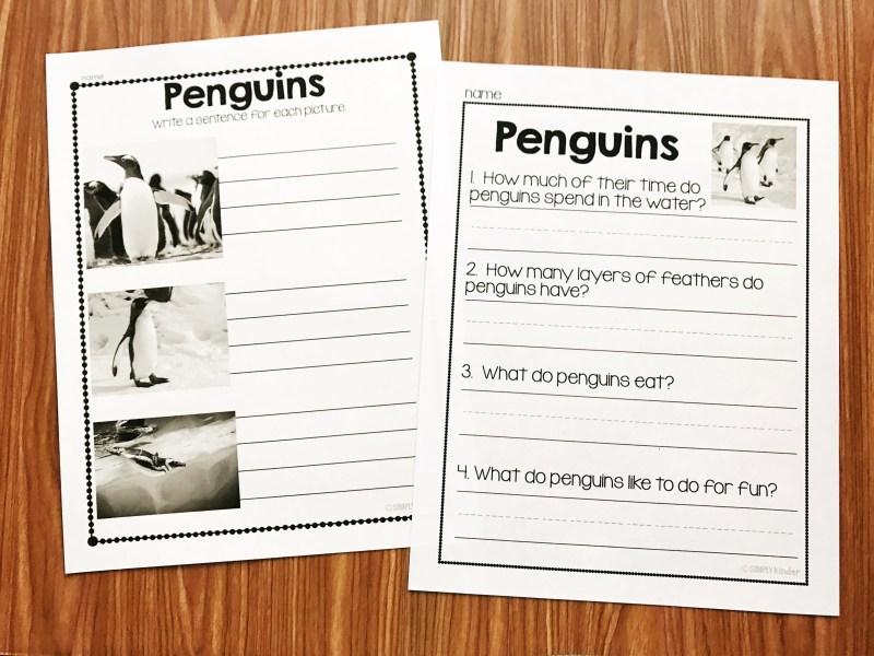 Nonfiction Penguin activities for Kindergarten, Preschool, and first grade students.
