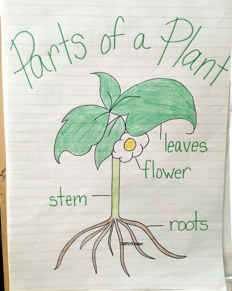 Free Printable: Parts Of A Plant - Simply Kinder [ 1000 x 800 Pixel ]