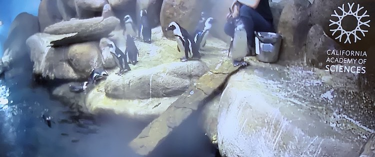 I love how you have a front row seat to watch the penguins being fed.