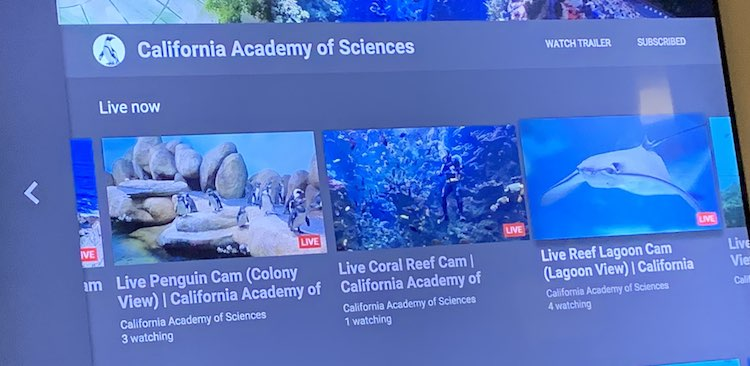 Live videos listed under the California Academy of Science channel on the Apple TV YouTube app.